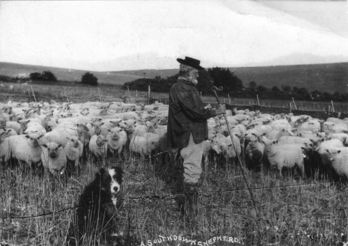 Copyright National Trust. Two of the shepherds on Saddlescombe farm had names that suggest their ancestors must have followed this profession since the very introduction of surnames - Thomas Shepherd and Fred Wooler.